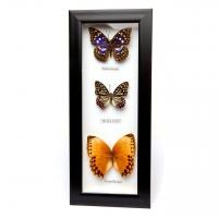 Картина метелики QW-3