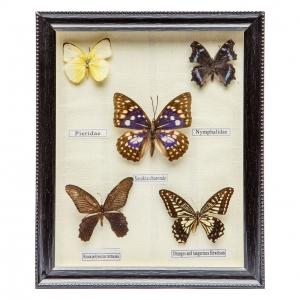 Картина бабочки QW-4