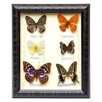 Картина метелики QW-5