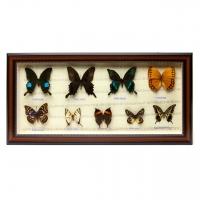 Картина бабочки QW-7