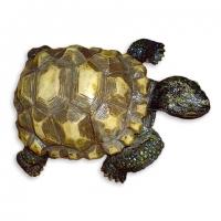 Статуетка черепаха Тортилла